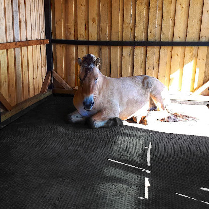 Pferd liegt bequem auf den EVA Stallmatten Luckymat