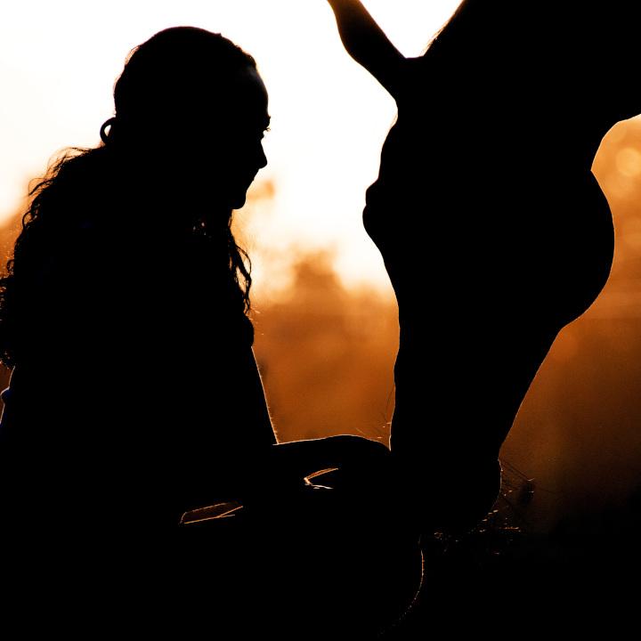 Pferd und Mensch Beziehung